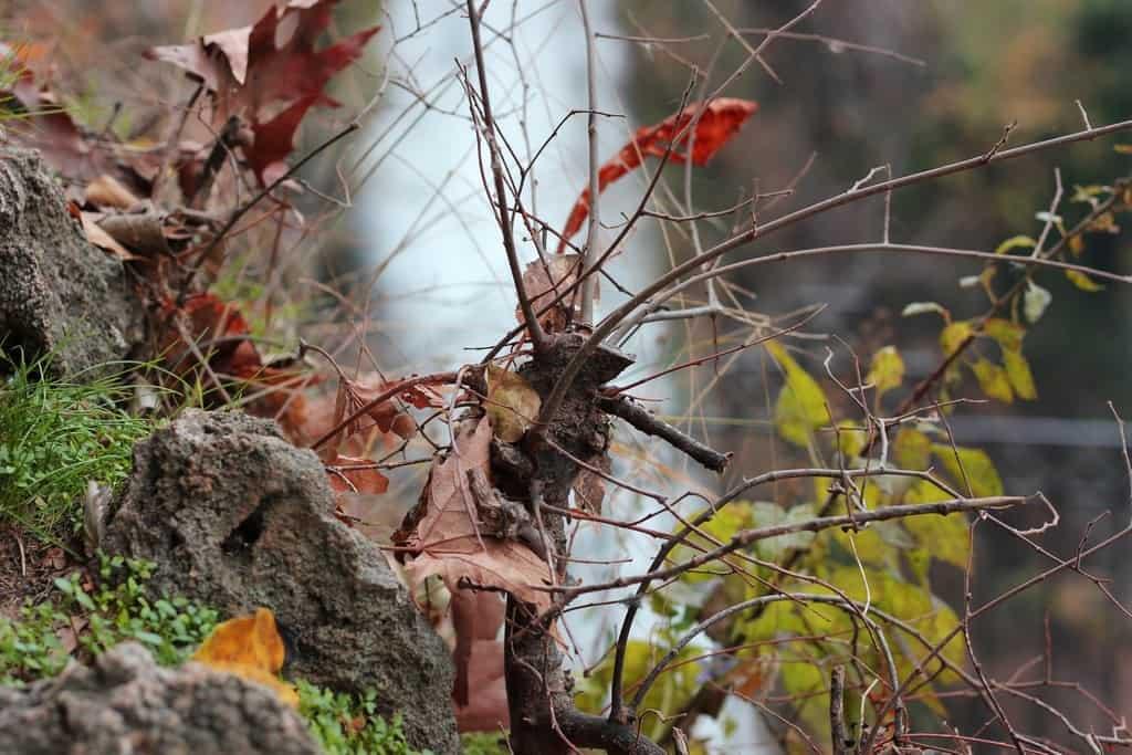 Καταράκτες και Ιαματικά λουτρα Έδεσσα-Πόζαρ