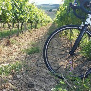 wine road of Macedonia